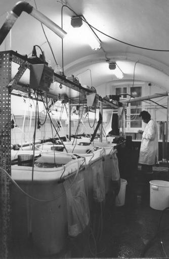 Het laboratorium van het Artemia Reference Center bevindt zich tot 2016 in de kelders van de Rozier. Kweekinstallaties in 1985 bij onderzoek naar het gebruik van het Artemia-pekelkreeftje voor aquacultuur (© Universiteitsarchief Gent, W09_01_001).