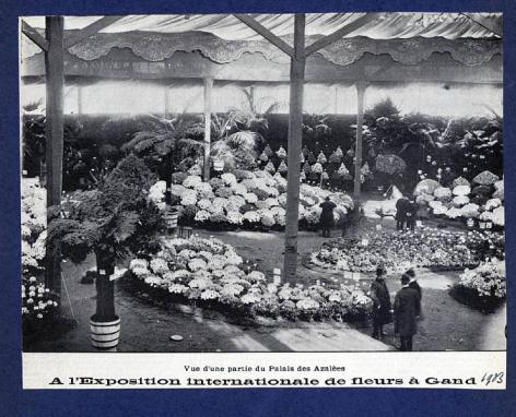 Azaleapaleis op de Floraliën van 1903 in het Casino (Collectie Universiteitsbibliotheek, © UGent ).