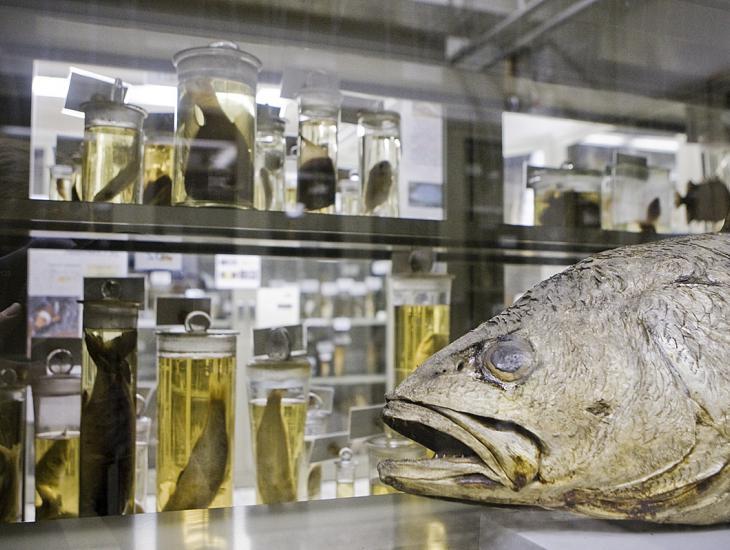 Griezelen in het Museum voor Dierkunde.