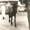 Paardenspecialist aan de Gentse Veeartsenijschool Jean Henri Bouckaert (links) laat een paard voor zich uit lopen om te achterhalen waar het precies hinkt (foto privécollectie Jan Ignace Bouckaert).